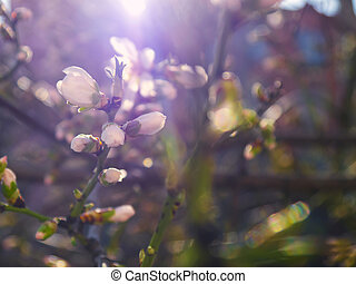 Beautifully blooming tree branches with flowers