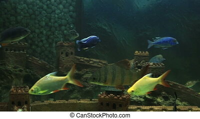 Beautifully decorated aquarium with a freshwater fish.