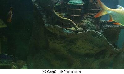 Beautifully decorated aquarium with freshwater fish.