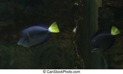 Beautifully decorated aquarium with a Marine fish.