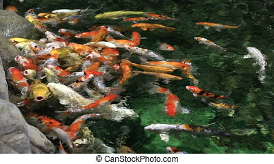 Beautifully decorated artificial pond with Koi. -...