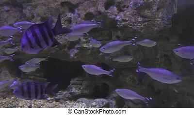 Beautifully decorated Marine Aquarium with silvery fish...