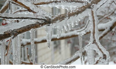 Beautifully frozen ice and melting icicles on tree branch -...