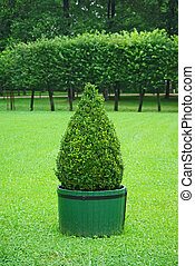 Beautifully manicured park plant. - Beautifully manicured...