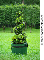 Beautifully manicured park plant. - Beautifully manicured ...