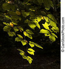 Beautifulsunlgiht dappled leaves in Fall forest landscape