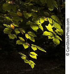 beautifulsunlgiht, tacheté, feuilles, dans, automne, forêt, paysage