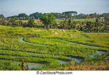 Beautifun Balinese landscape