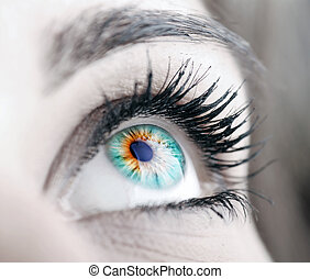 Beauty big eye - Beautiful colorful eye close-up