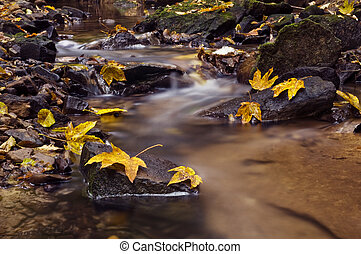 brook - beauty brook and leaves in forest