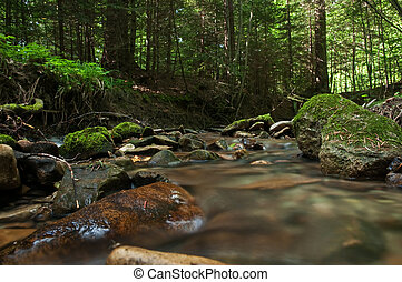 brook - beauty brook in green forest
