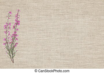 Beauty heather on linen background