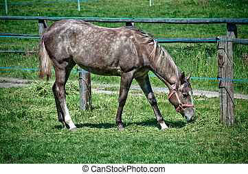 beauty horse on the green grass pasture