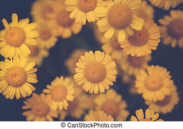Beauty in nature - yellow flowers