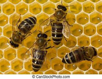 Beauty inside the hive. Bees transform nectar into honey