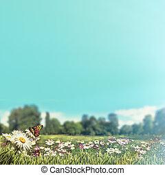 beauty, lente, achtergronden, met, madeliefje, bloemen, onder, blauwe hemelen