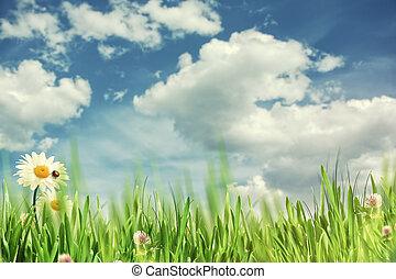 beauty, lente, time., abstract, natuurlijke , achtergronden, met, madeliefje, bloemen