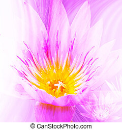 Beauty Lotus Background For Wallpaper