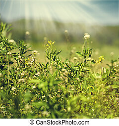 Beauty meadow, abstract natural backgrounds for your design