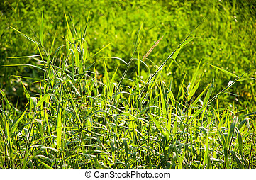 Beauty natural backgrounds for your