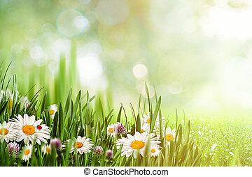 beauty, natuurlijke , achtergronden, met, chamomile, bloemen, voor, jouw, ontwerp