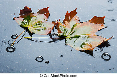 Beauty of  fading autumn in rainy day
