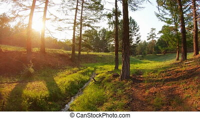 Beauty of nature. The stream and green grass in the forest at sunset. POV