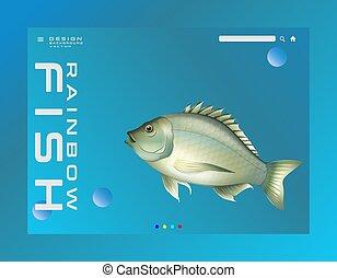 beauty of rainbow fish vector