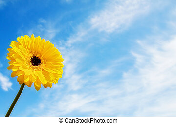 Beautiful summer time with yellow gerbera daisy over blue sky. With room for your text.