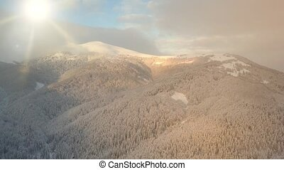 Beauty of wildlife on snowy day. Aerial view of winter mountains covered with pine trees. Flight over ski resort and snowy spruce forest.