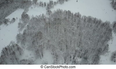 Beauty of wildlife on snowy day. Aerial view of winter mountains covered with pine trees. Low flight overski resort and snowy spruce forest.