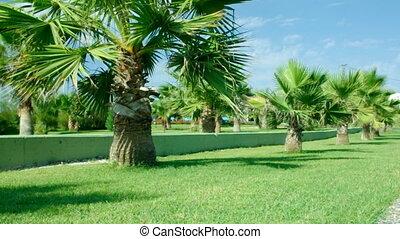 Beauty palm-trees in Antalya, Turkey.