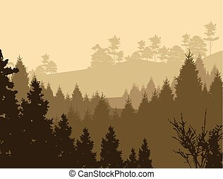 beauty pine forest silhouette