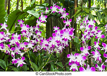 Beauty purple orchids