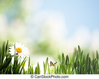 Beauty seasonal landscape with wild flowers and grass