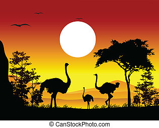 beauty silhouette of ostrich