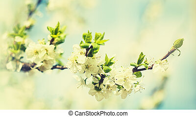 Beauty spring backgrounds with apple tree flowers