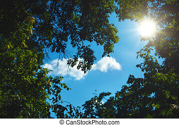 Beauty summer day in the forest, natural landscape