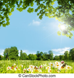 Beauty summer day on the meadow, natural backgrounds