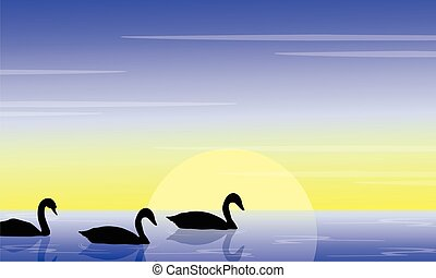 Beauty swan on lake scenery silhouette