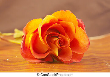 Beauty treatment orange rose