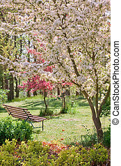 Beauty tree in bloom with bench - beauty tree in bloom with ...
