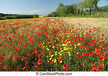 beauty, van, tuscan, platteland