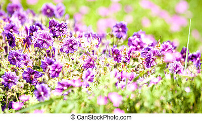 Beauty wild flowers on the meadow, panoramic natural backgrounds