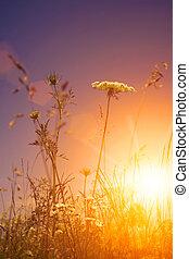 Beauty wild flowers under the evening sun, environmental backgrounds