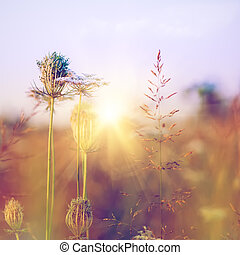 beauty, wilde bloemen, op, de, weide, milieu, achtergronden