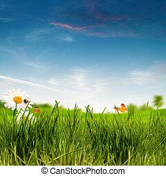 beauty, zomer dag, op, de, weide, milieu, achtergronden