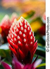 beautyful, bromeliad, flor