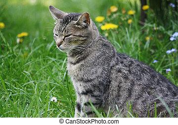 Beautyfull cat sitting in the garden