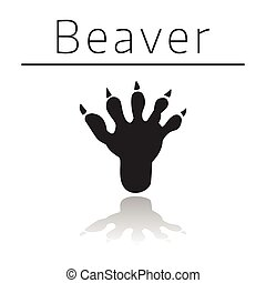 Beaver animal track with name and reflection on white ...